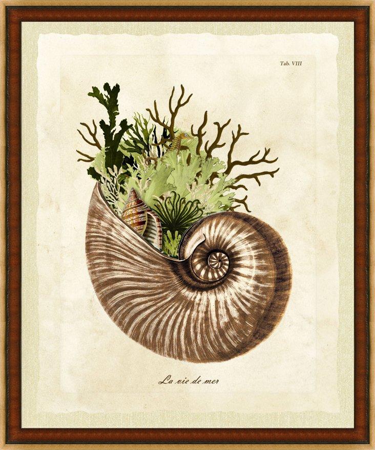 Wood-Framed Sea Life Print I