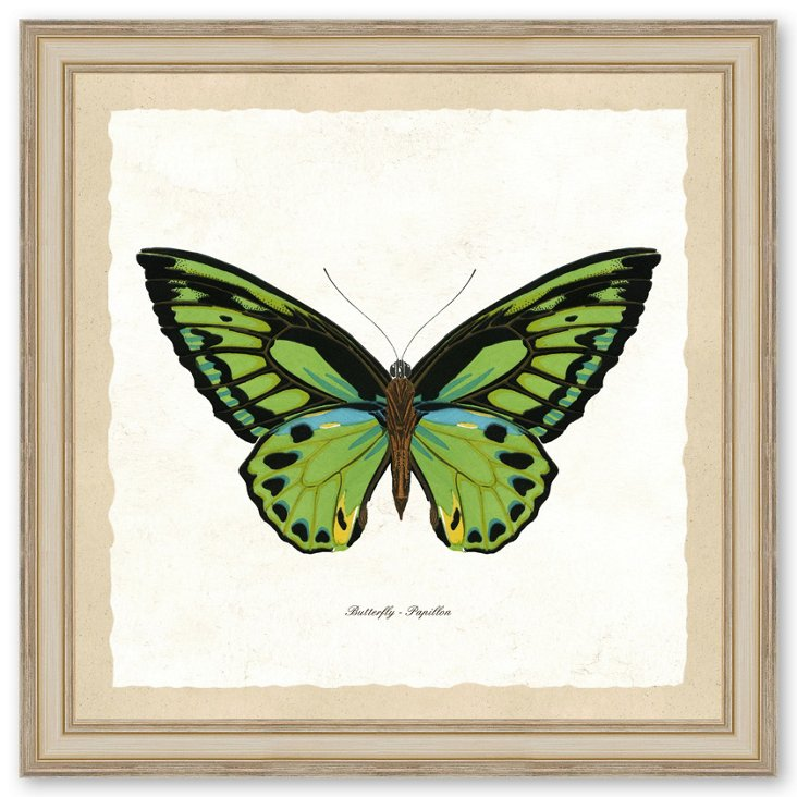 Single Butterfly Print II