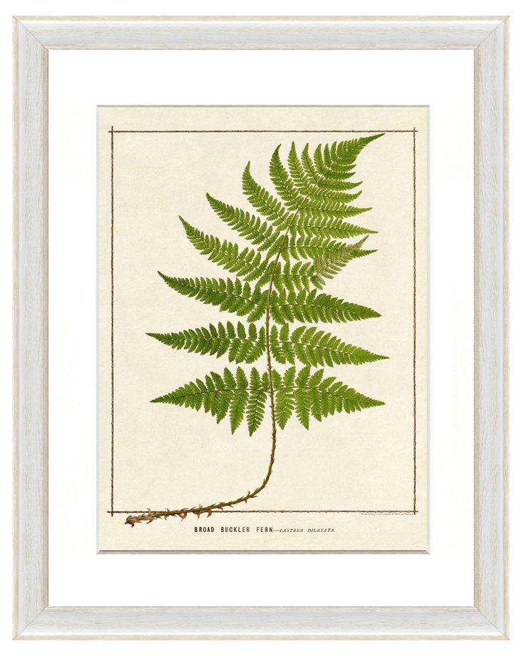 Single Fern Print I