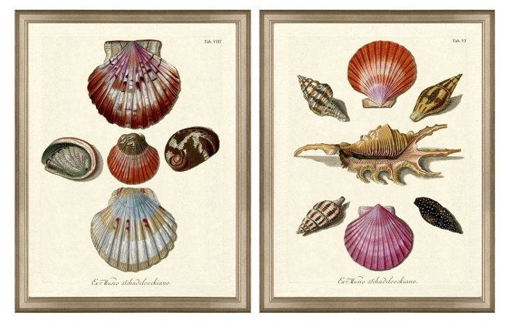 Shell Collage Print Set