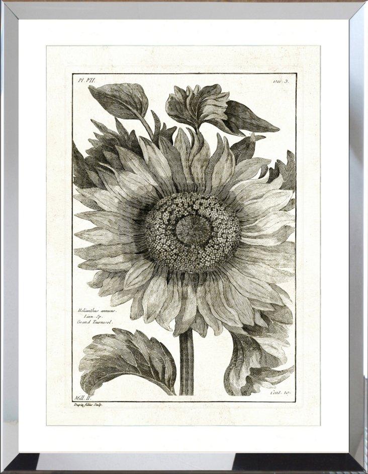 Mirror Framed Botanical Print I