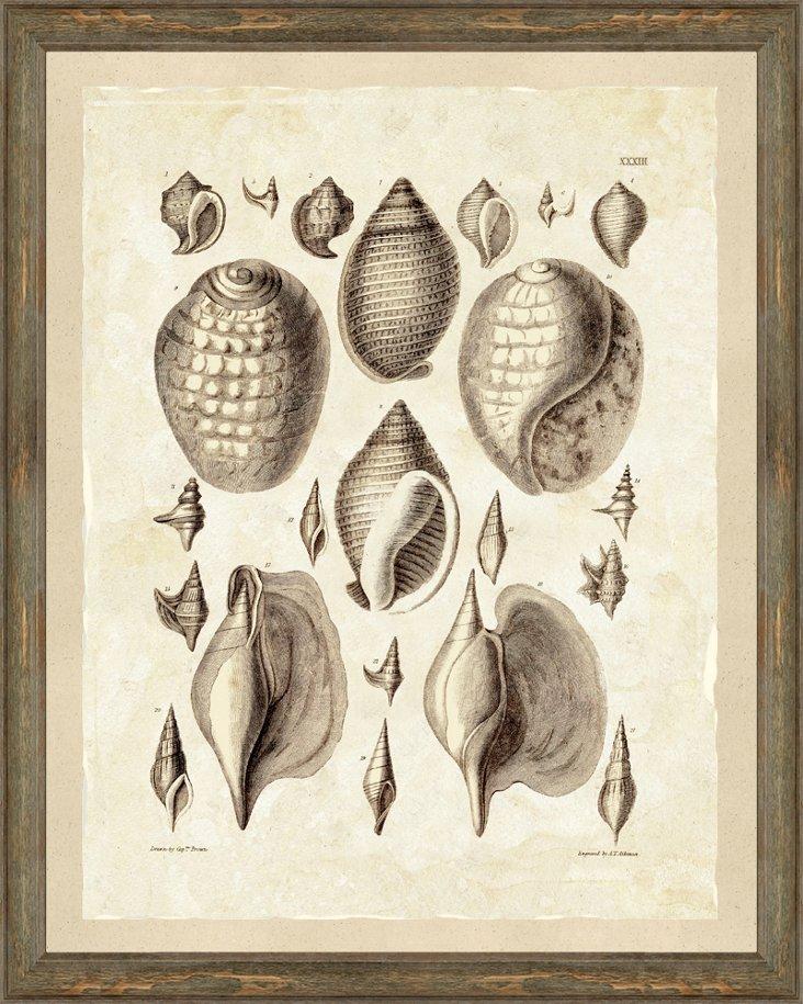 Sepia Shells Print II