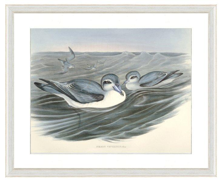 Seabird Print II
