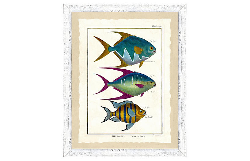 Tropical Fish Print II