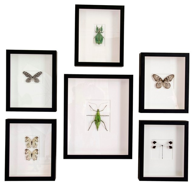 Framed Insects, Set of 6