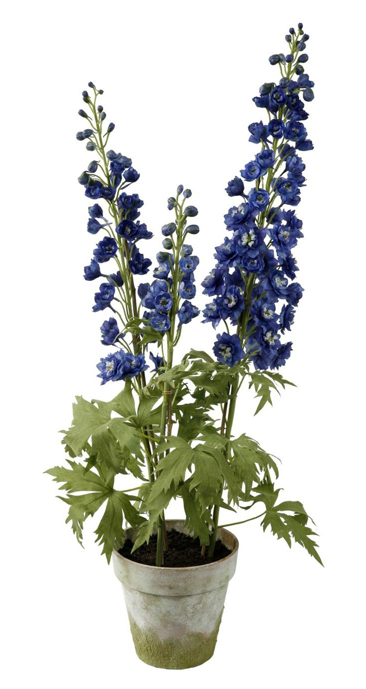 Delphiniums in Clay Pot, Blue