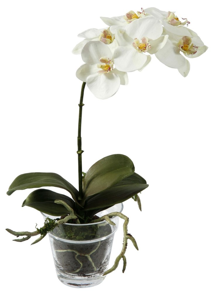 "14"" Phalaenopsis in Glass Planter, Faux"