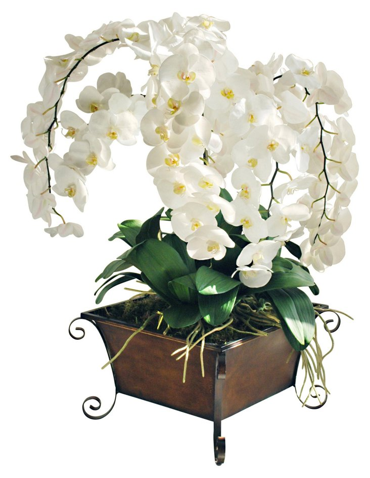 Grand Orchid Scroll Planter, White