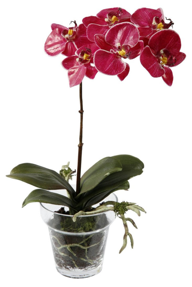 14'' Phalaenopsis in Glass Planter, Faux