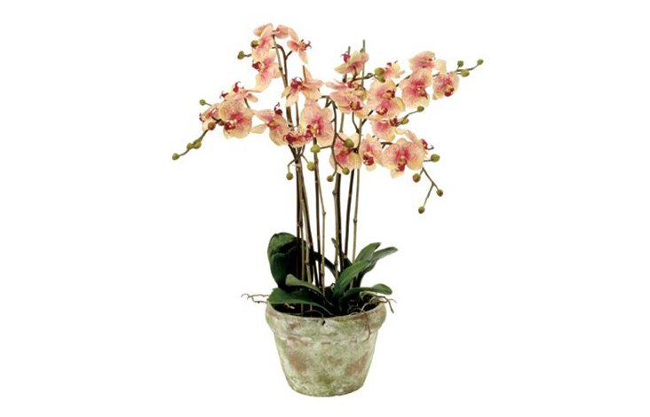 "30"" Phalaenopsis in Pot, Faux"
