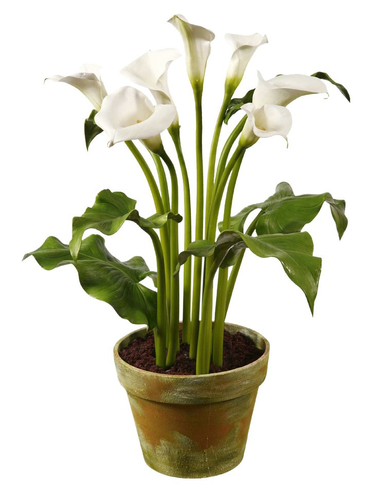 """30"""" Calla Lilies in Clay Planter, Faux"""