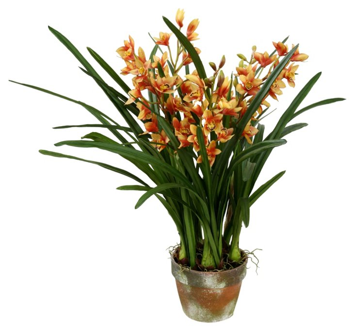 Cymbidium in Pot, Yellow