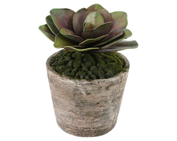 """10"""" Hibiscus Succulent in Planter, Faux"""