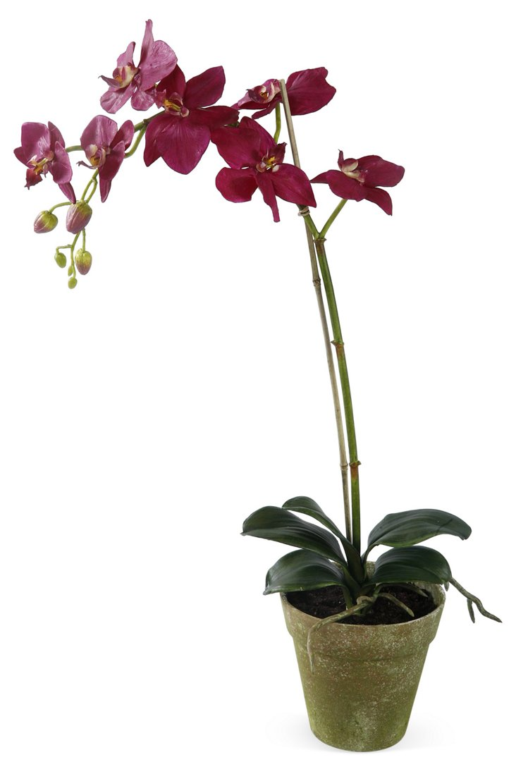 "22"" Orchid Phalaenopsis in Pot, Purple"