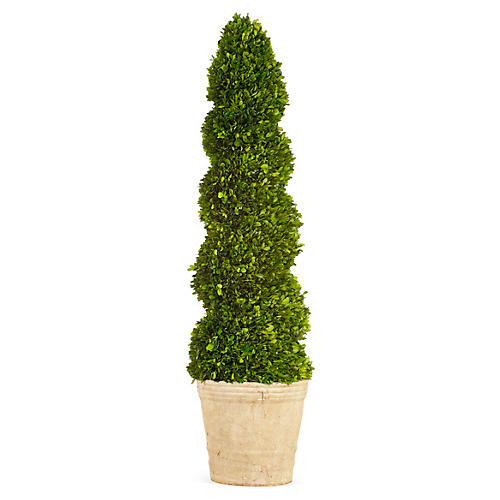4' Boxwood Spiral Topiary, Preserved