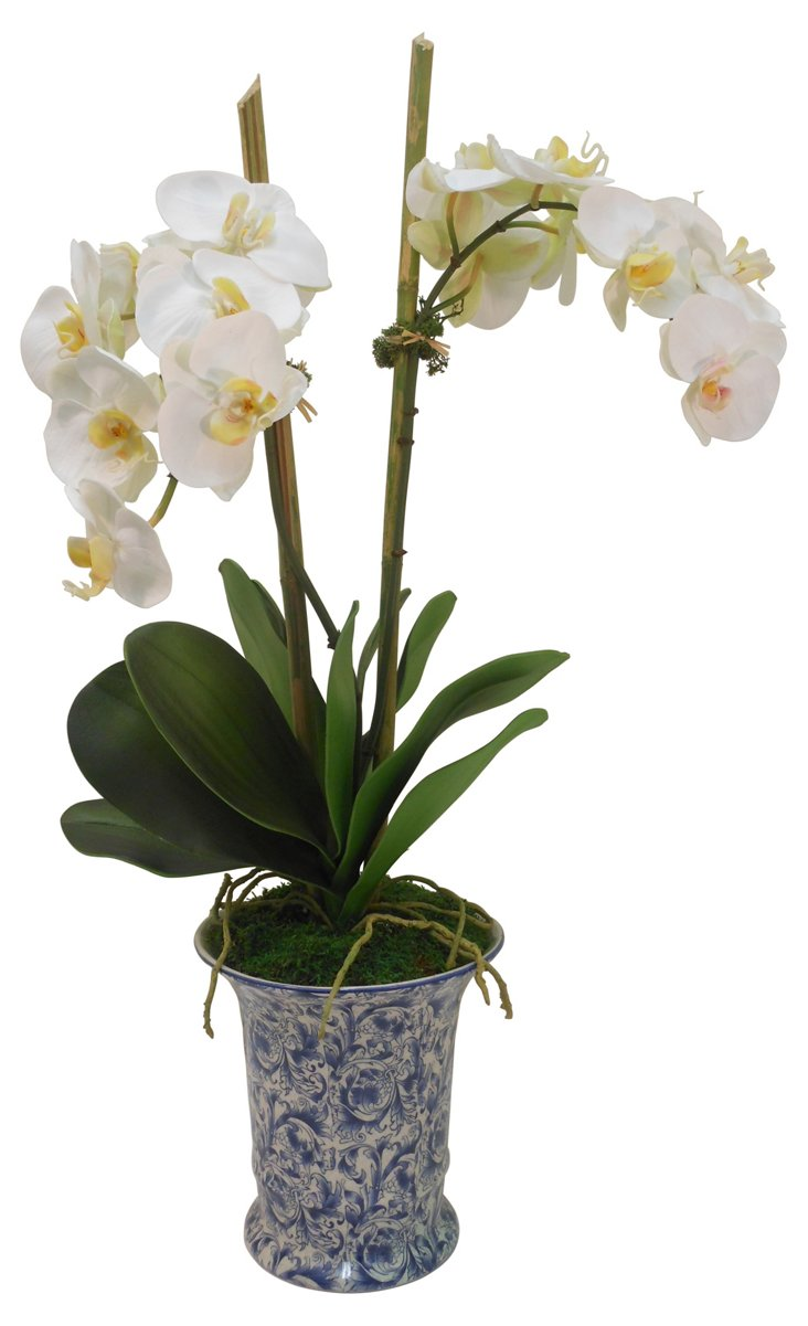 """30"""" Phalaenopsis Orchid Cachepot, Faux"""