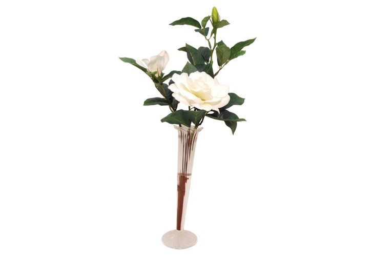 Gardenia in Glass Trumpet Vase, White