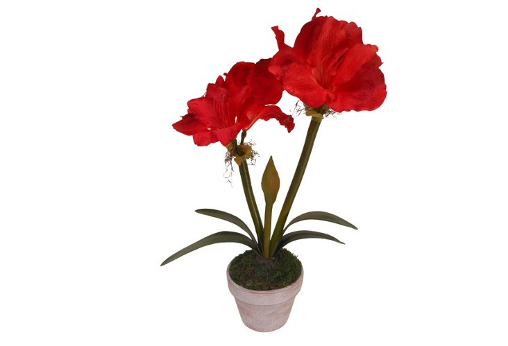 "26"" Amaryllis in Pot, Deep Red"