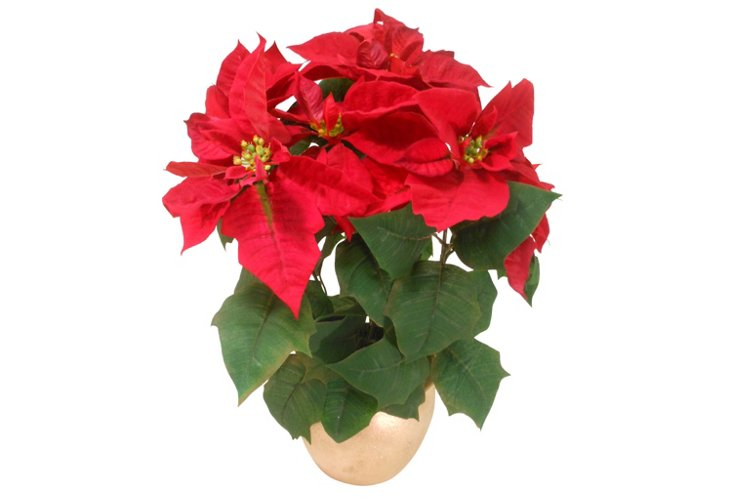 Poinsettia in Gold Pot, Medium, Red