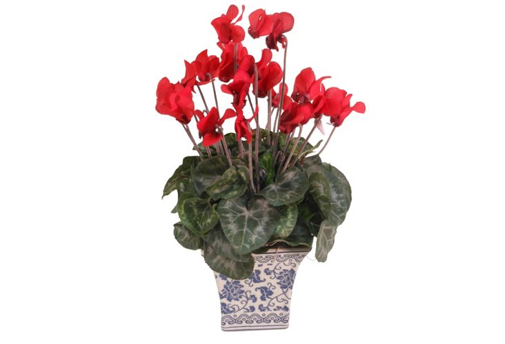 "12"" Cyclamen in Pot, Red"