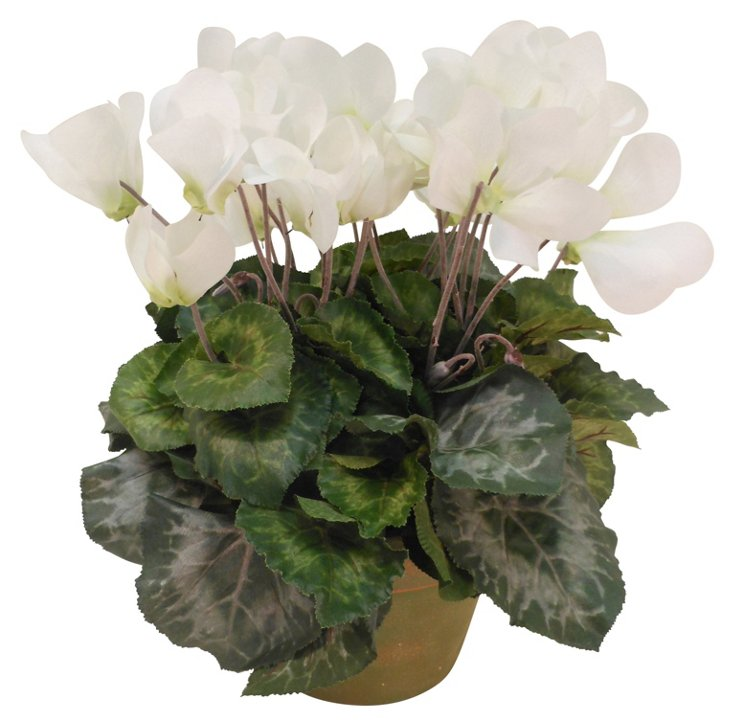 "14"" Cyclamen in Planter, Faux"