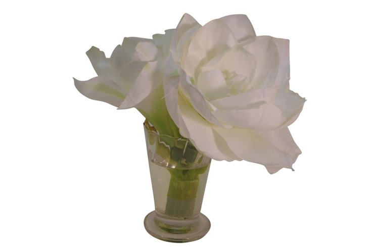 Amaryllis in Parfait Vase, White