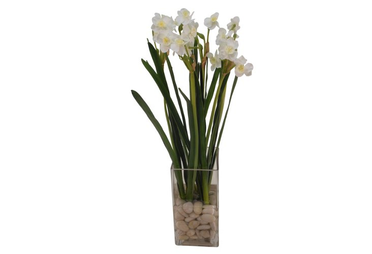 Paperwhite Narcissus in Tall Square Cube