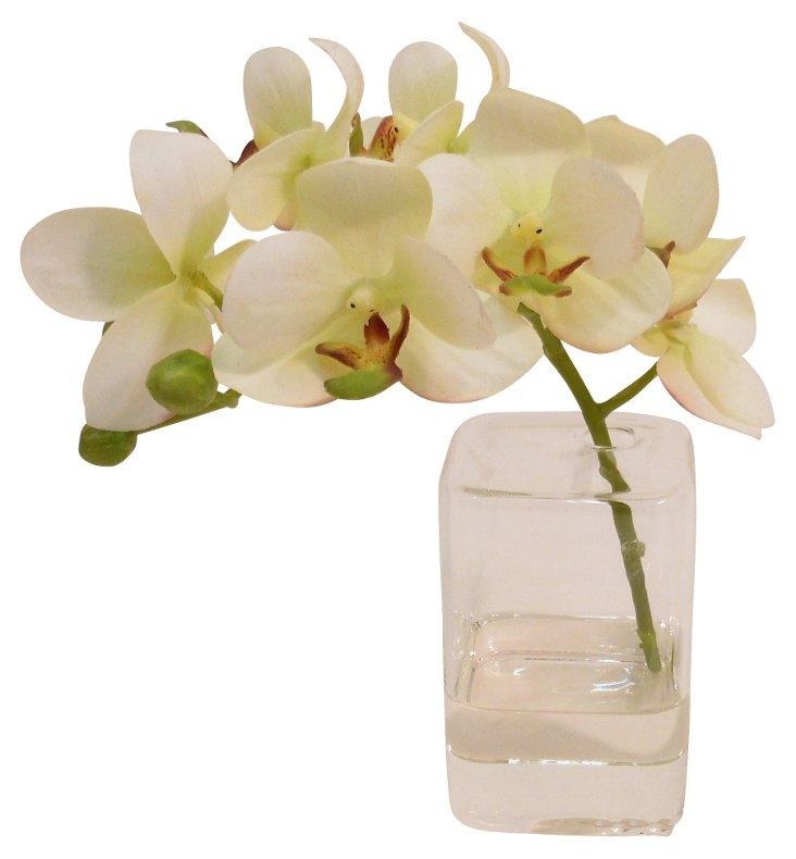 "8"" Phalaenopsis in Cube Vase, White"