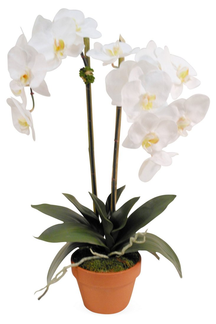 """26"""" Orchid in Planter, Faux"""