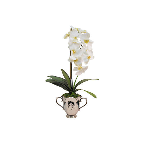 "36"" Phalaenopsis in Julep Cup, Faux"