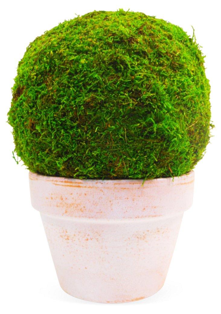 "12"" Moss Ball in Terracotta Pot, Faux"