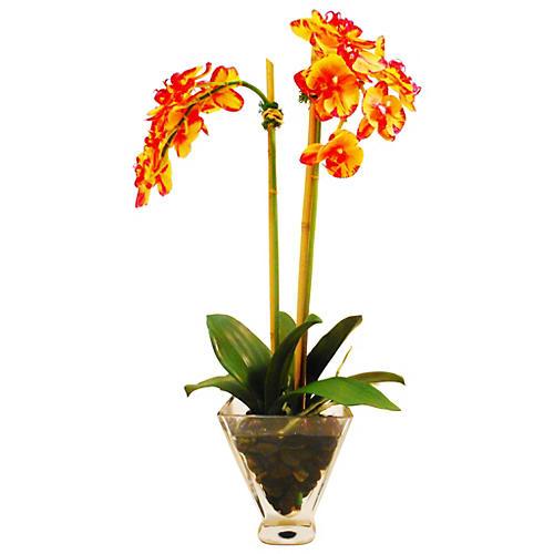 """25"""" Phalaenopsis in Vase, Faux"""