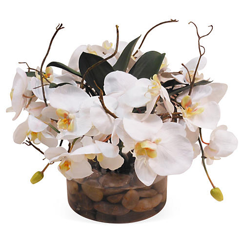 "16"" Phalaenopsis in Glass Vase, Faux"