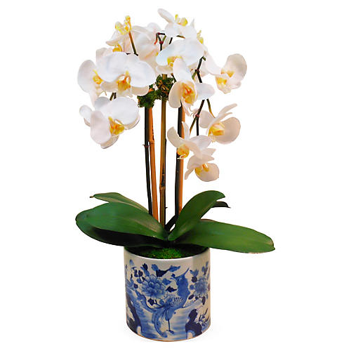 "25"" Phalaenopsis in Planter, Faux"