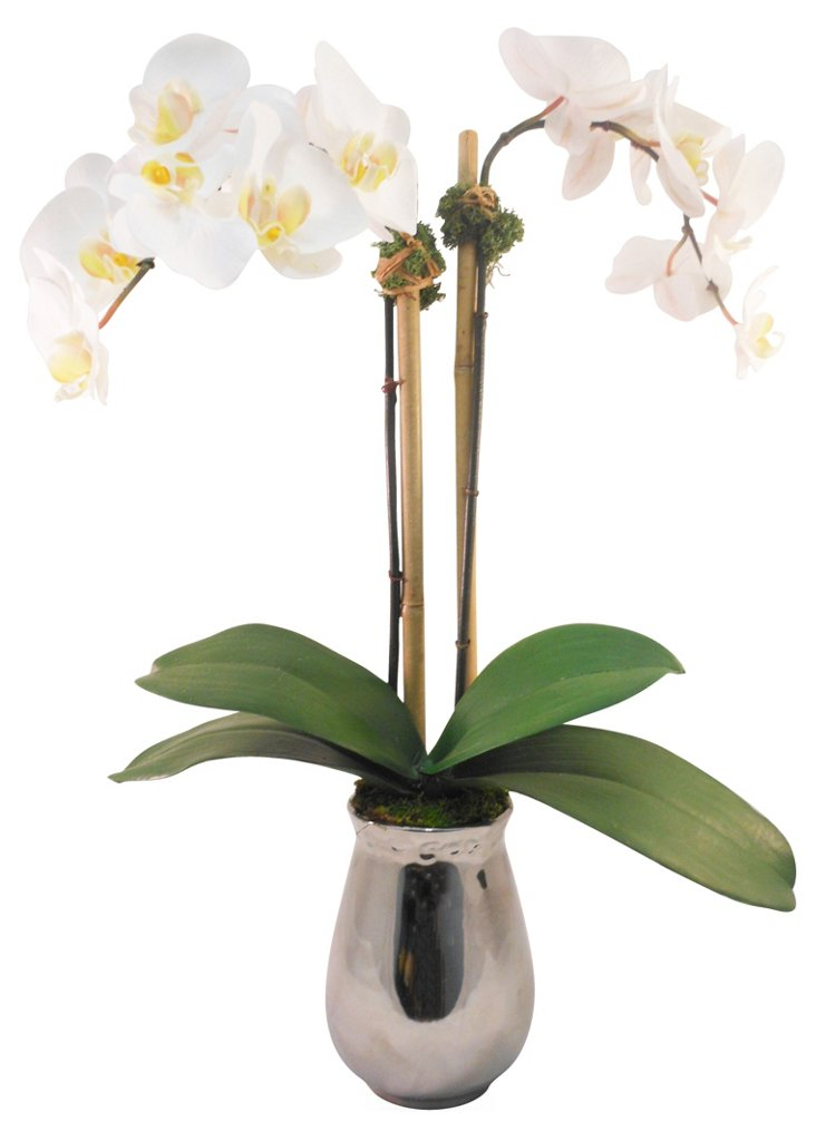 "23"" Phalaenopsis in Planter, Faux"