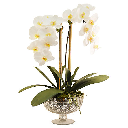"25"" Phalaenopsis in Footed Bowl, Faux"