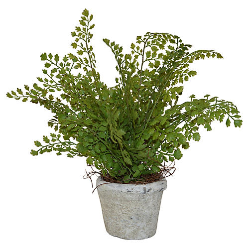 """12"""" Maiden's Hair in Planter, Faux"""