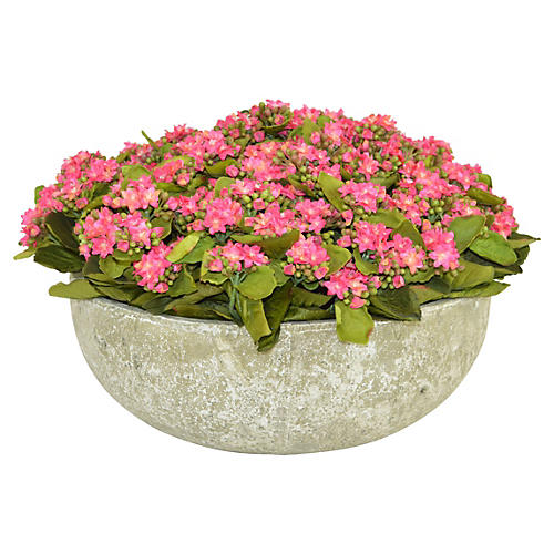 "18"" Pink Kalanchoe in Bowl, Faux"