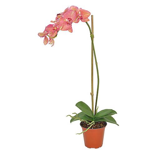 """22"""" Single Phal Orchid Arrangement, Faux"""
