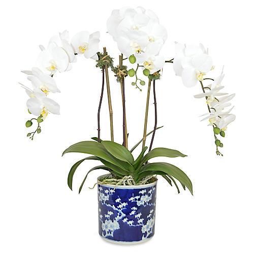 """28"""" Herne Phal Orchid Arrangement, Faux"""
