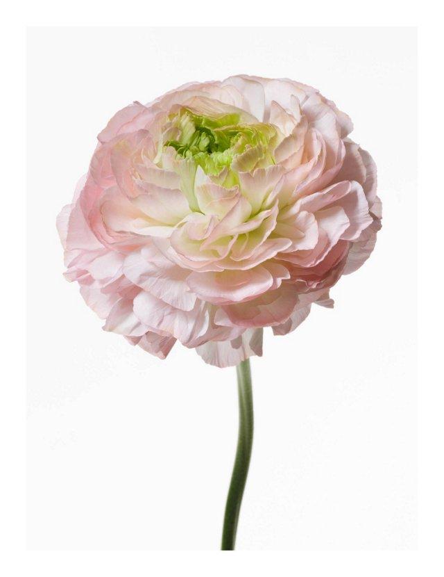 Big Blooms Photograph by Paul Lange II