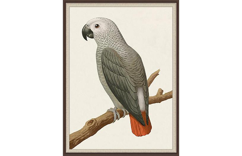 Lillian August, Gray Parrot 2