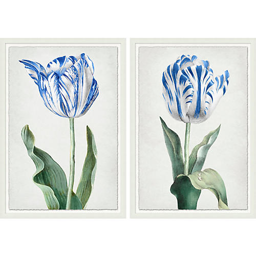Lillian August, Spring Tulip 1-2
