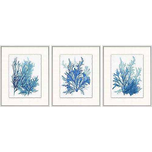 Azure Ocean Herbarium 7-9, Lillian August