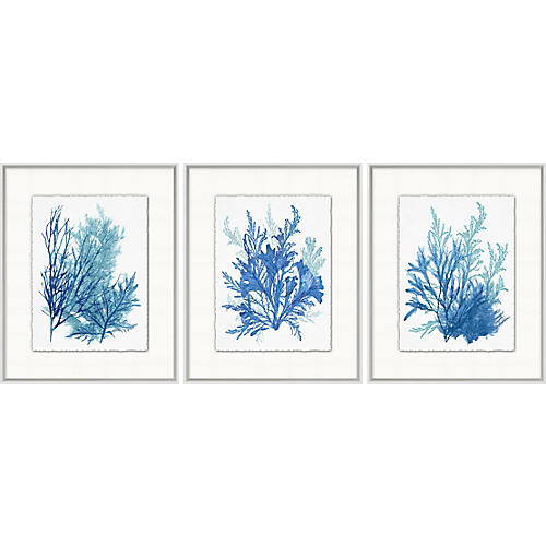 Lillian August, Azure Ocean Herbarium 7-9