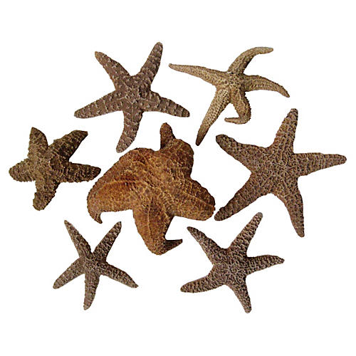 Starfish Collection, Set of 7