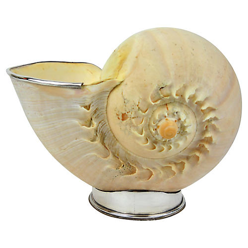Large Voluta Shell With Silver On Stand