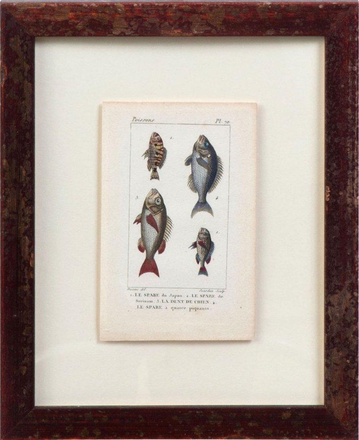 18th-C. Fish Engraving