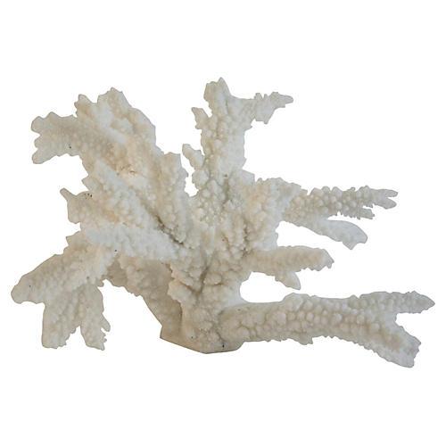 Natural Branch Coral Specimen