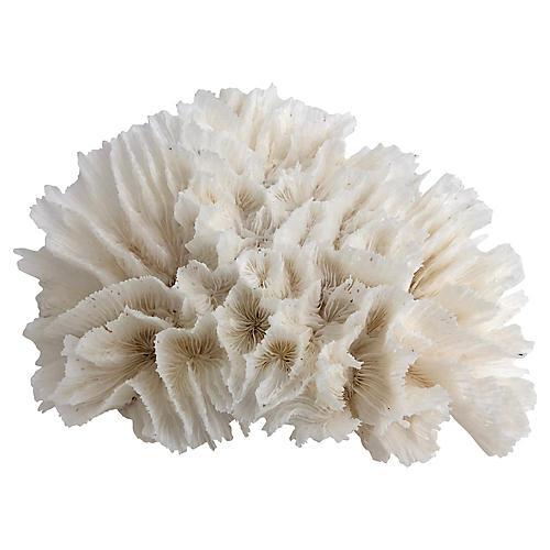 Natural Lettuce Coral Specimen
